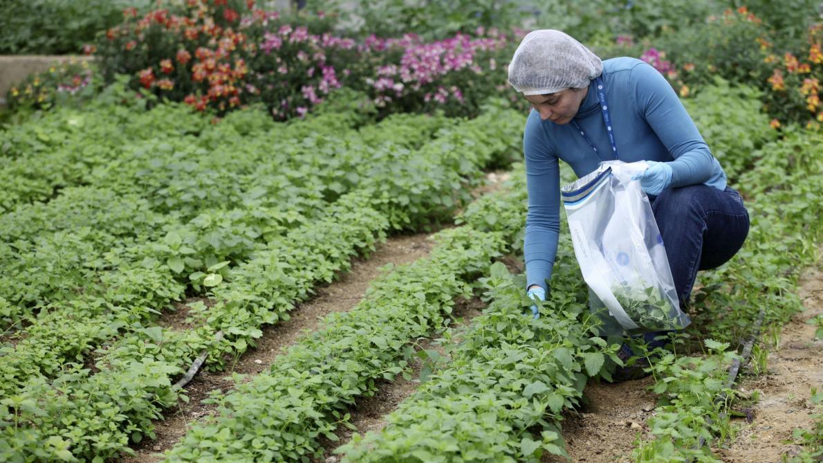 Sécurité alimentaire: l'Afsca veut mieux accompagner l'artisanat et ...