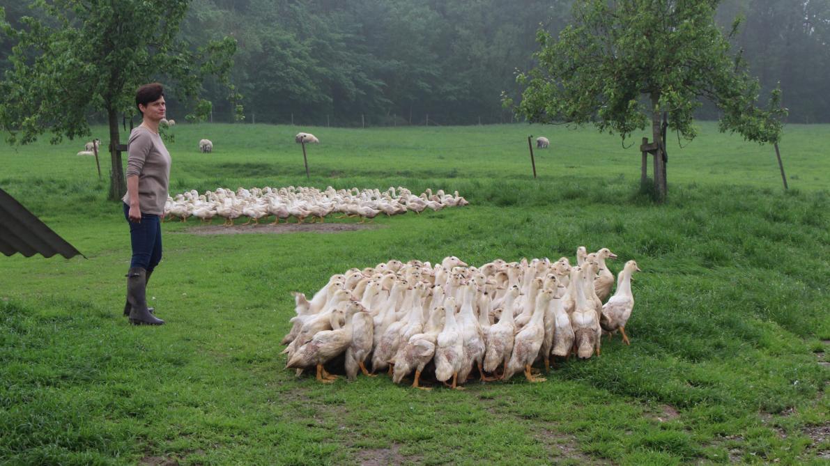 Le foie gras belge, gage de qualité et d'artisanat» - SillonBelge.be