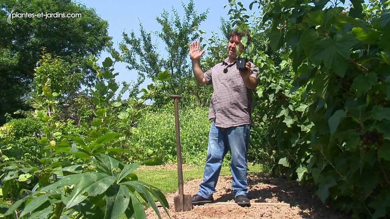parlons technique : la plantation du piment