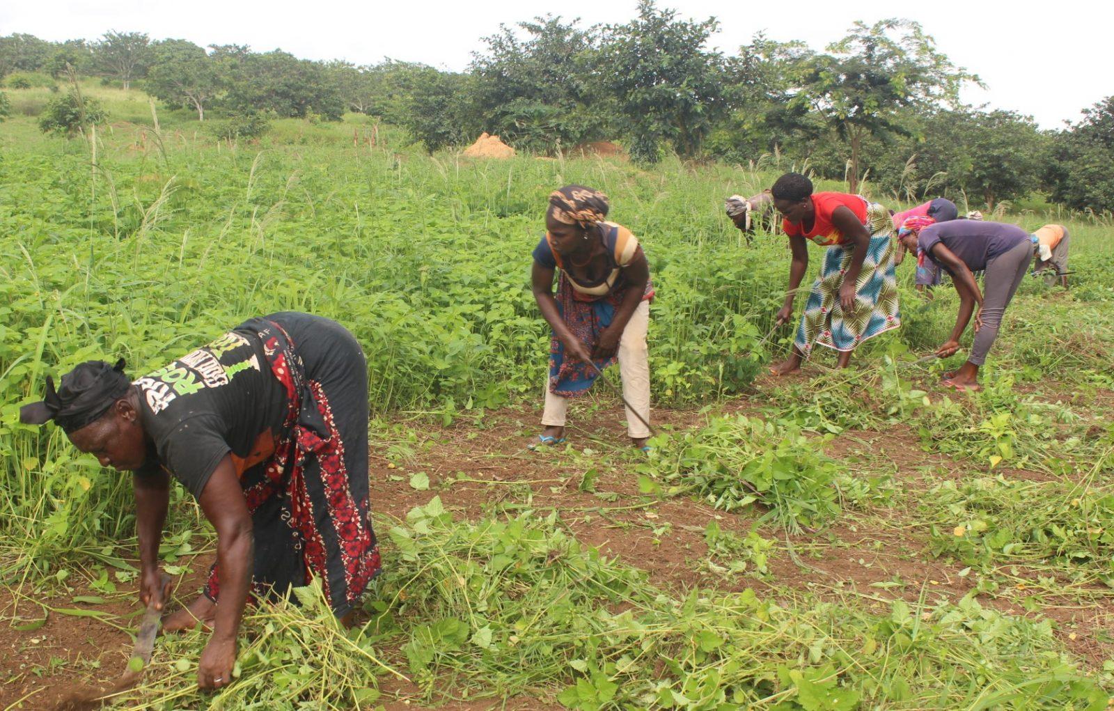 Entrepreneuriat en milieu rural : investir dans les cultures ...