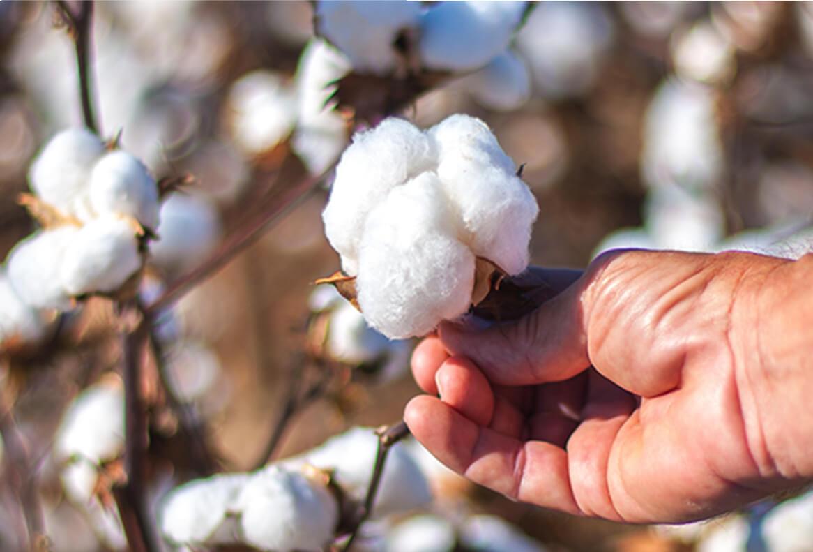 Types of Cotton