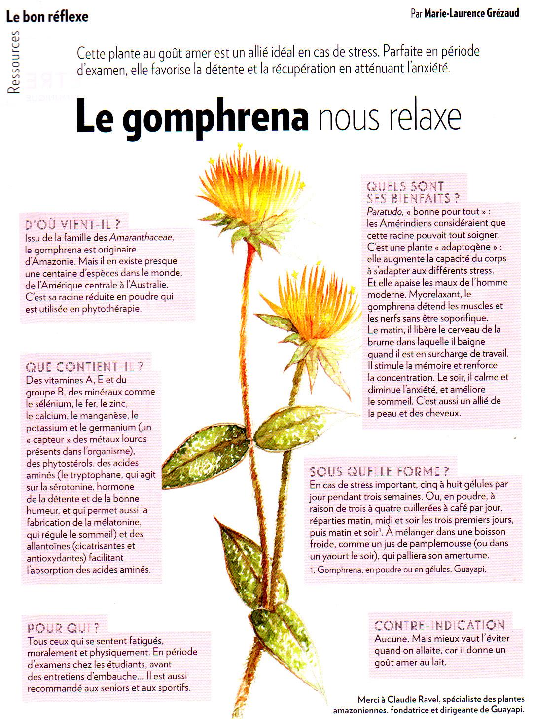 Phytospiritualité: Plantes : Le Gomphrena