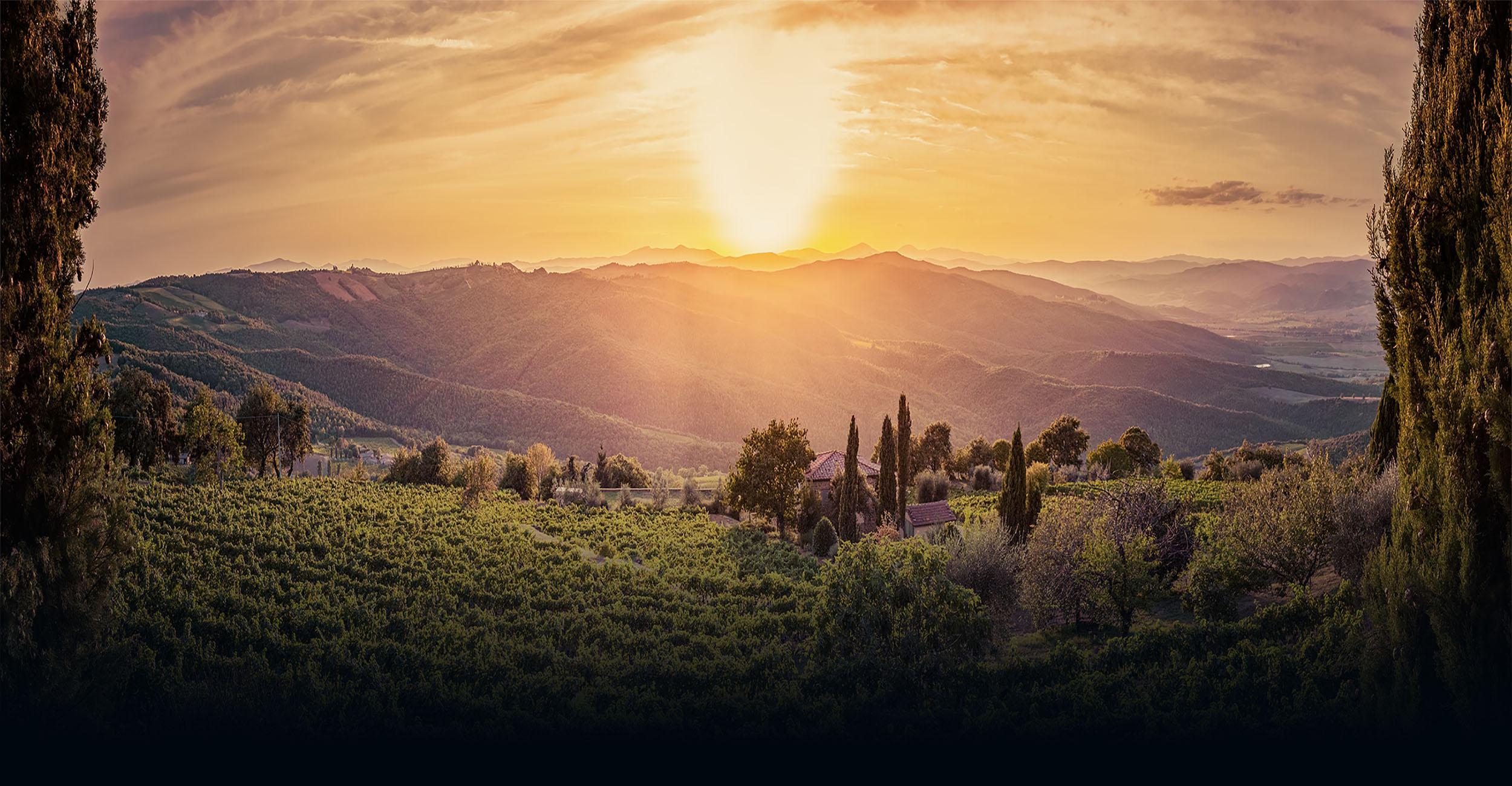 i Vini di Valentina - Importateur Vin Italien Distribution Vente
