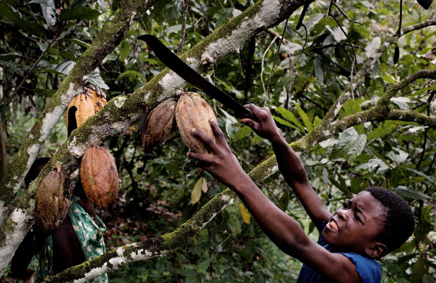 Child Labor: The Dark Side of Chocolate | WilderUtopia.com