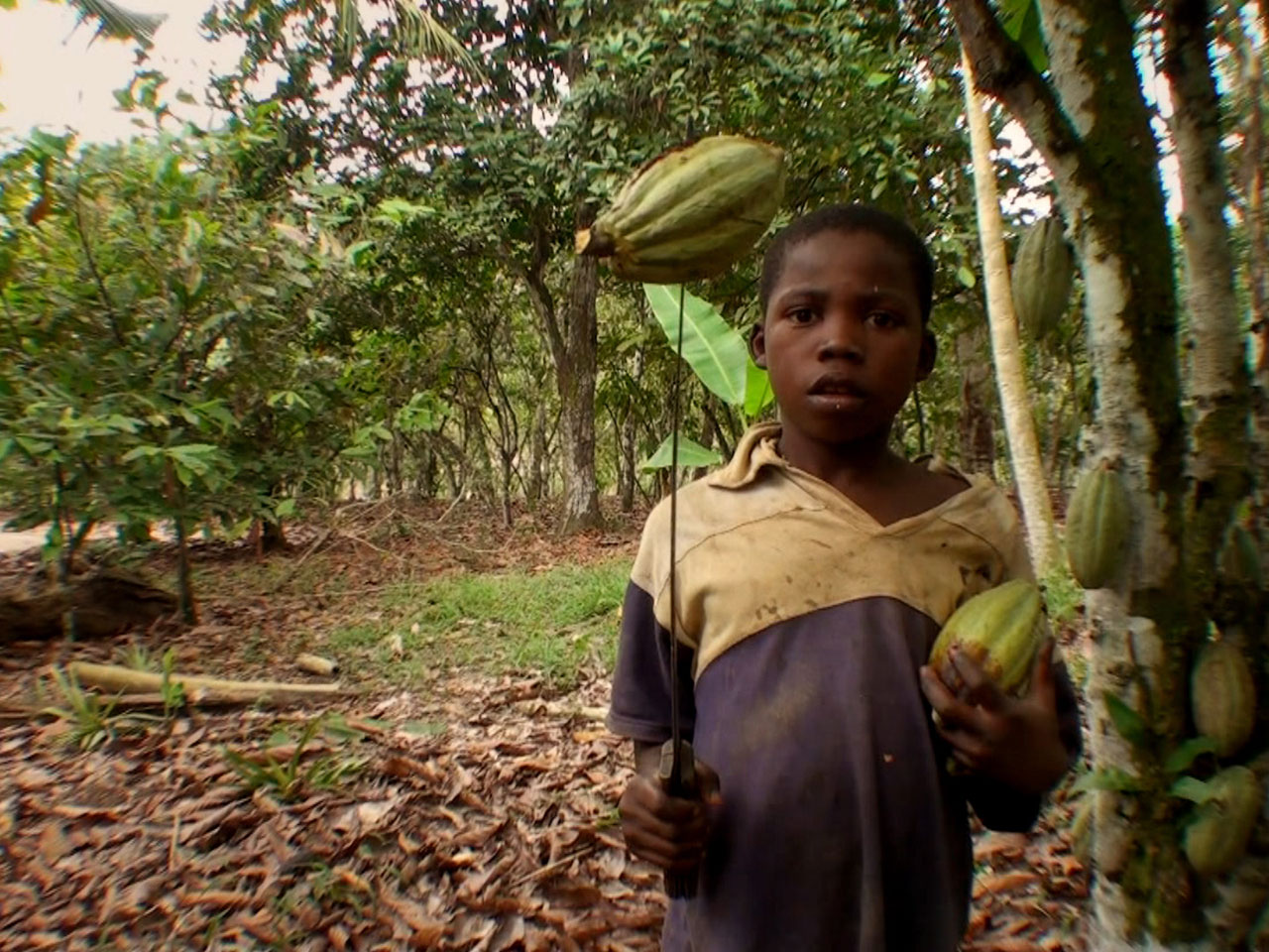 Documentary reveals child abuse in African cocoa industry ...